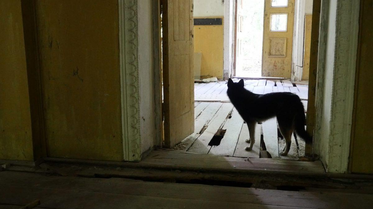 doggy-in-building-in-Zalissia-1-1200x675.jpg