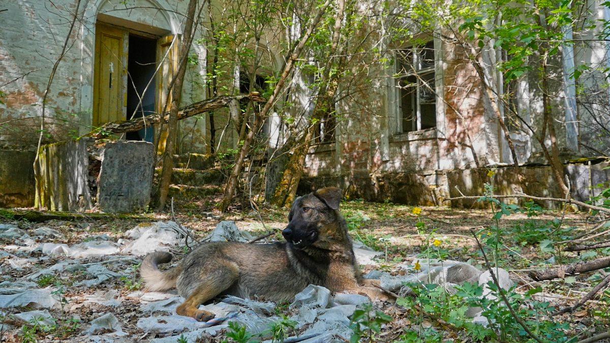 Doggy-in-Zalissia-1200x675.jpg