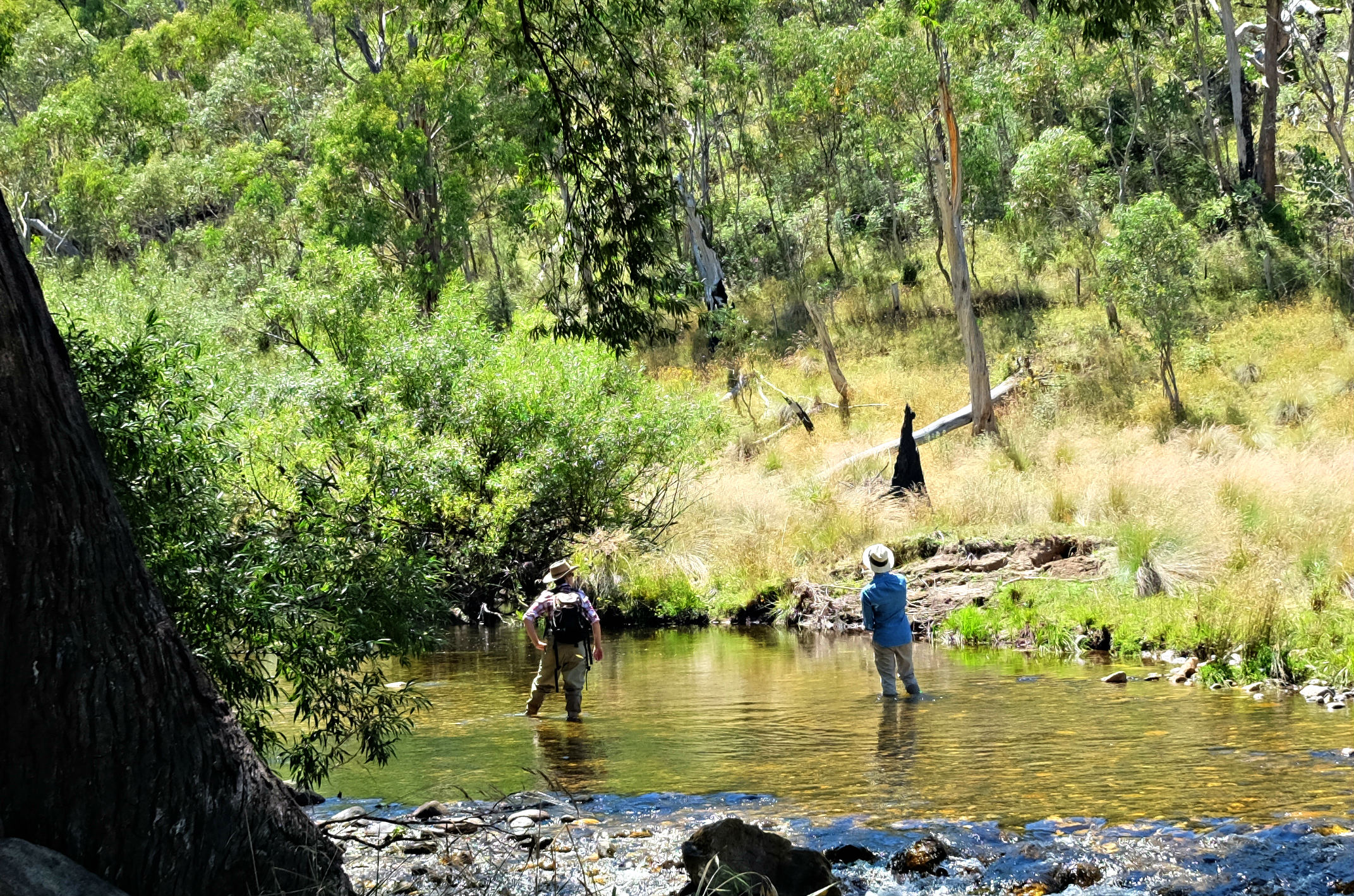 Big adventure, Anglers Rest or Eskdale. - 5 - 6hrs from Melbourne. Minimum booking of 4 people required.Designed for the dreamers, adventurers and anti-naysayers, these trips are truly epic experiences where you'll get to fish and hang out in some of the most remote and beautiful country in Victoria. You need to set aside a bit more time for these trips, but boy are they worth it. Comfortable cabins or accommodation can be arranged for these trips.Day 1: Hit the Bundarra for a dayDay 2: Explore the Big River for a dayDay 3: Smash Middle Creek or the main Mitta Mitta for a day.If you want to stay in the region, my friend Helen Packer offers the most incredible accommodation at The Willows in the Bundarra Valley. Honestly, it's a slice of paradise.