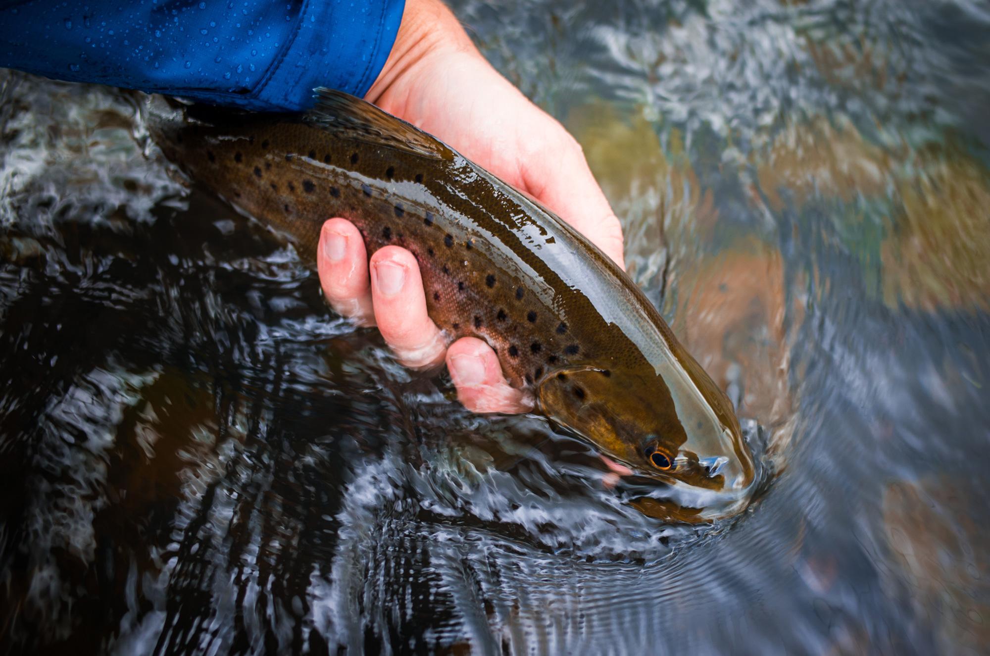 Goulburn-big-fish.jpg