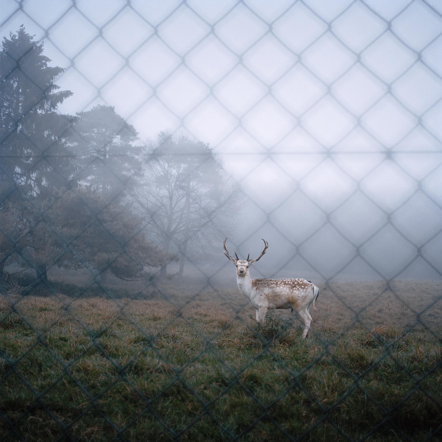 Maelle Collin_Deer_Web.jpg