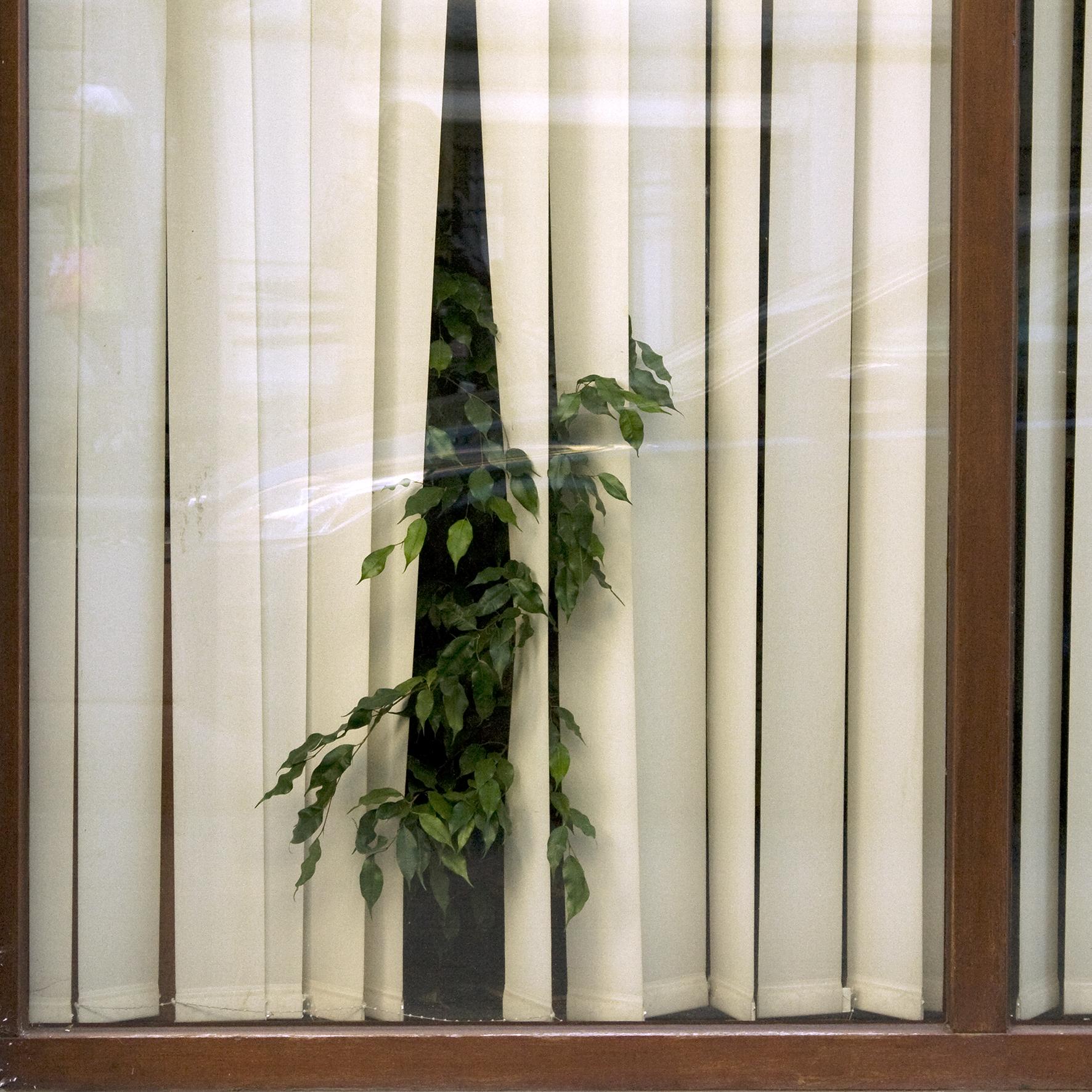Shelter-Window.jpg