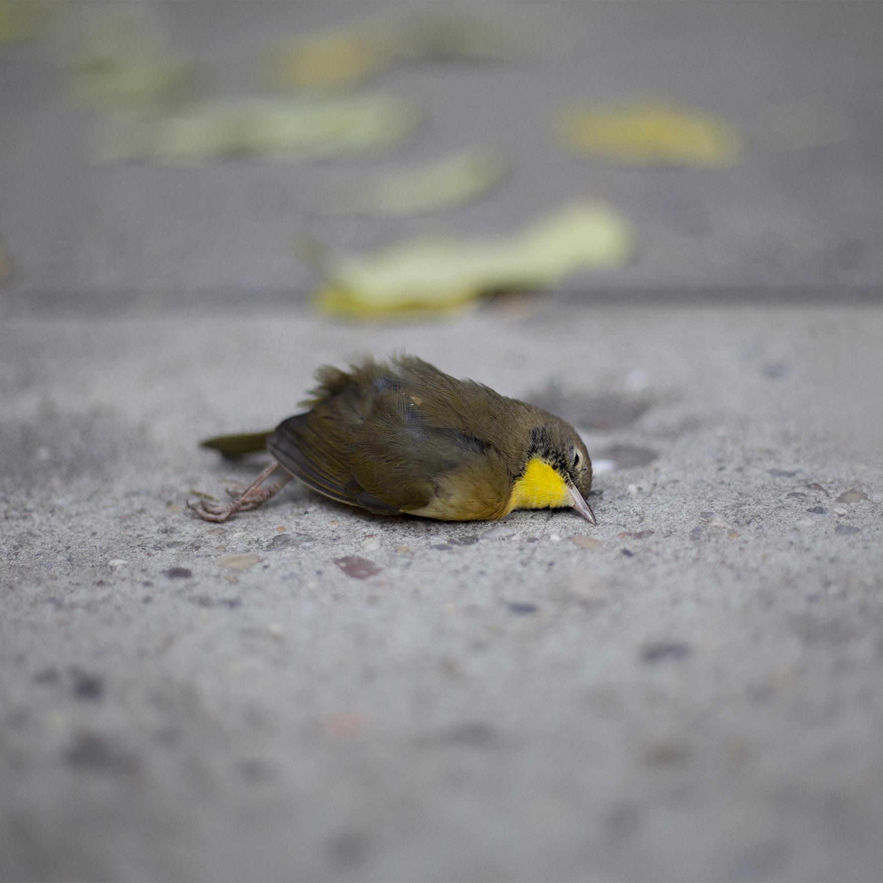 MaelleCollin_Bird_WEB.jpg