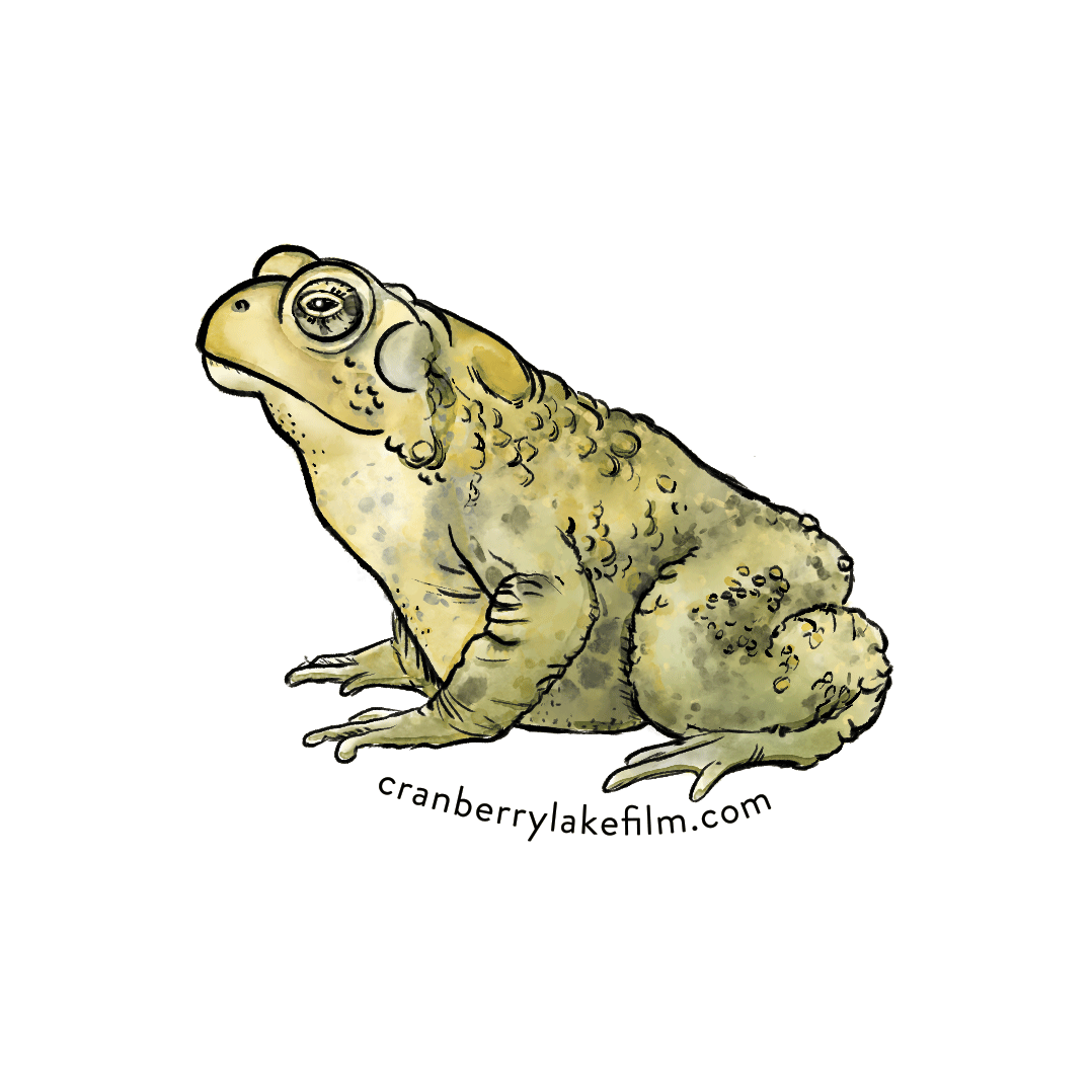 CranberryLake_sticker_Toad.png