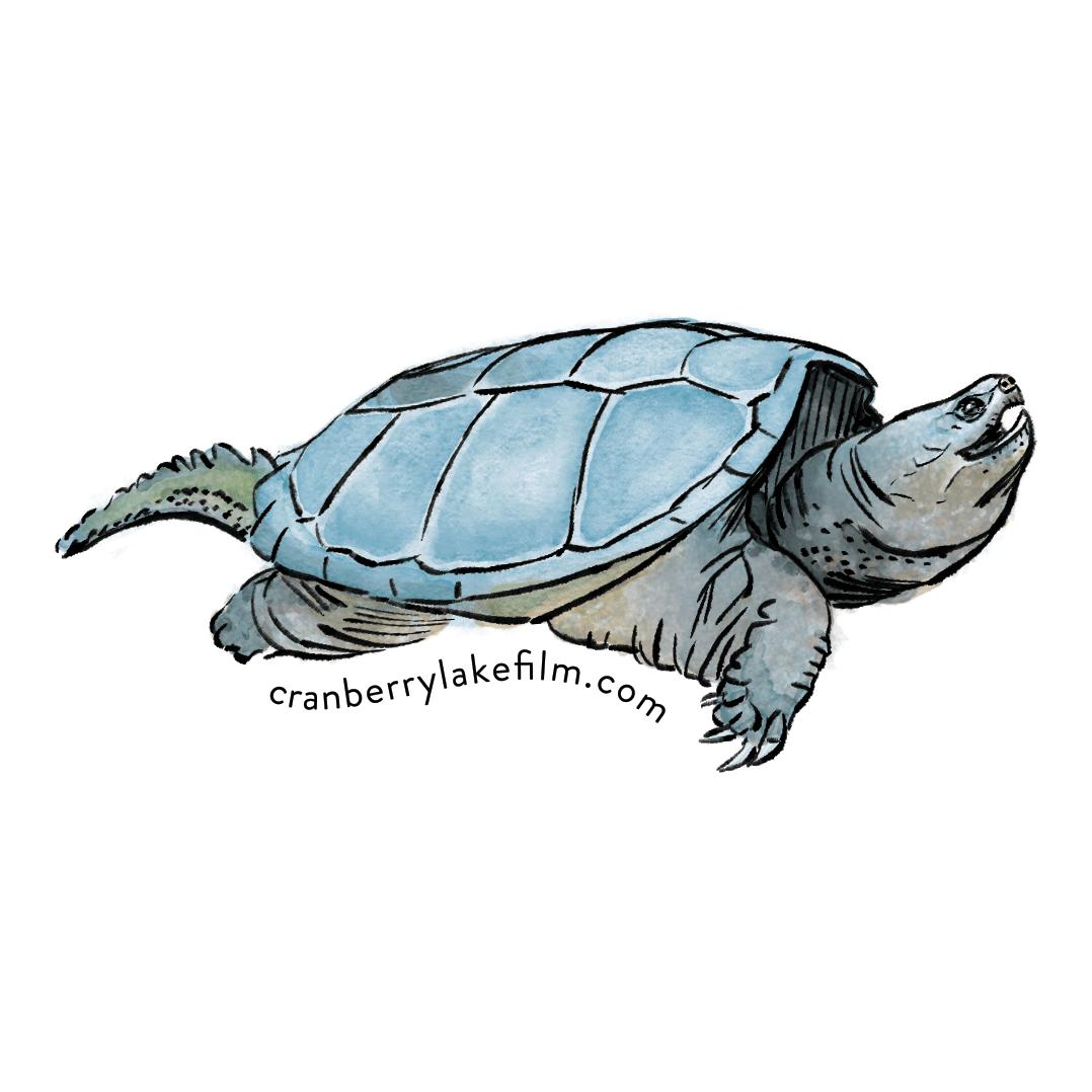 CranberryLake_sticker_Turtle.png