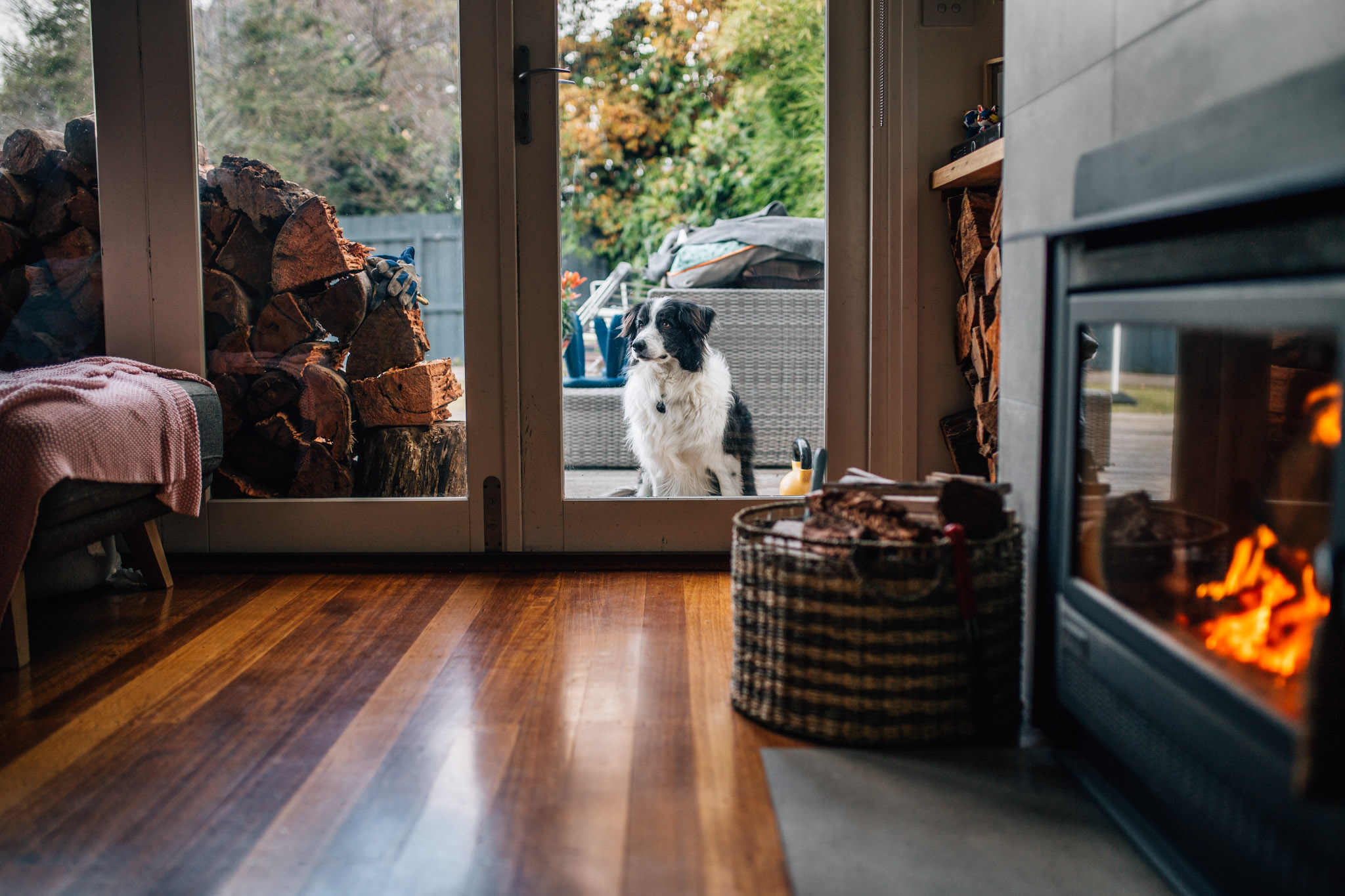 Dog outside glass door with fire.