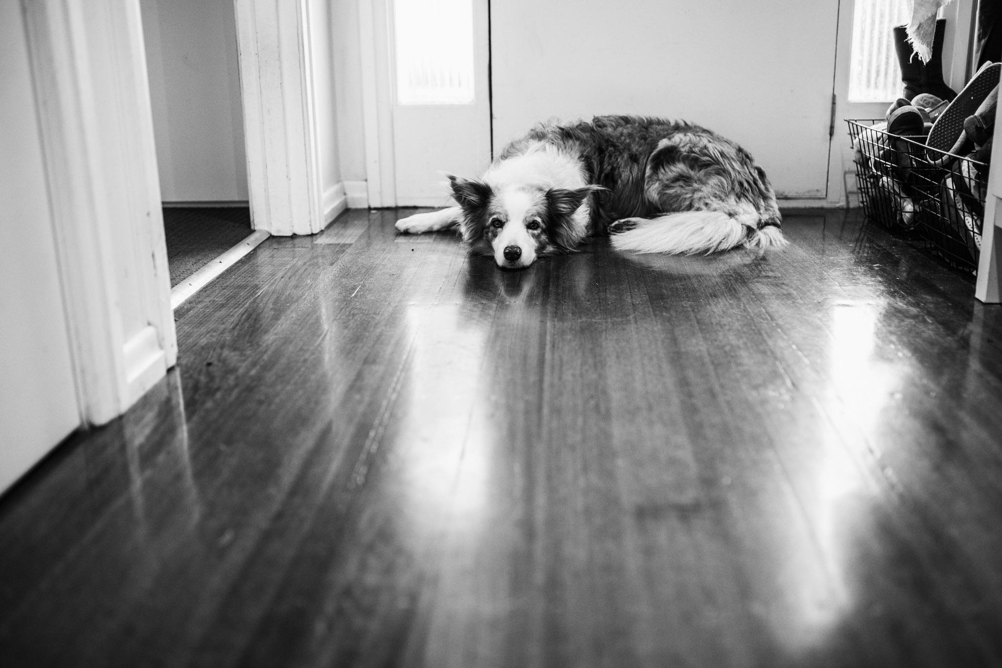 Dog in the hallway.