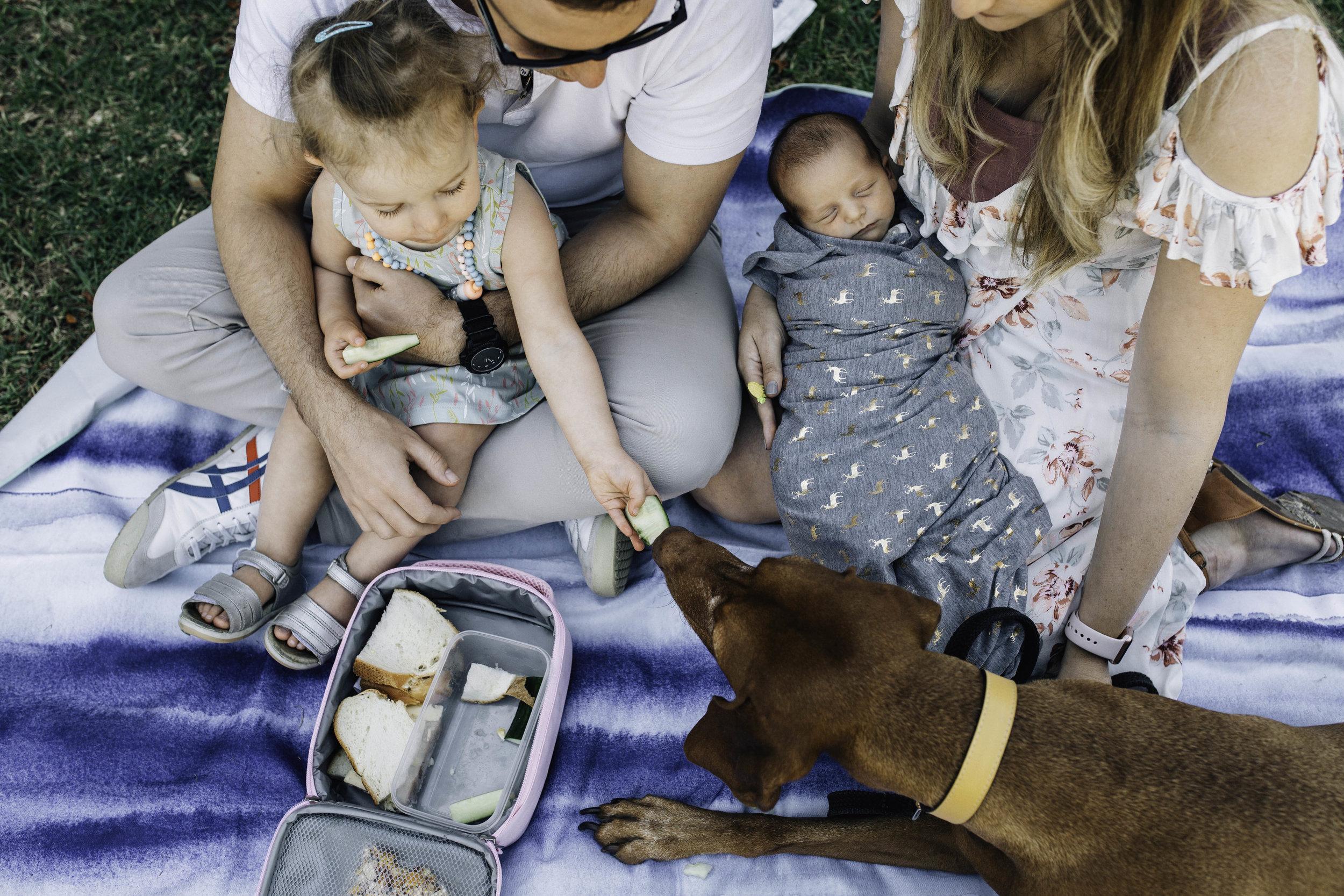 family-of-four-eating-picnic.jpg