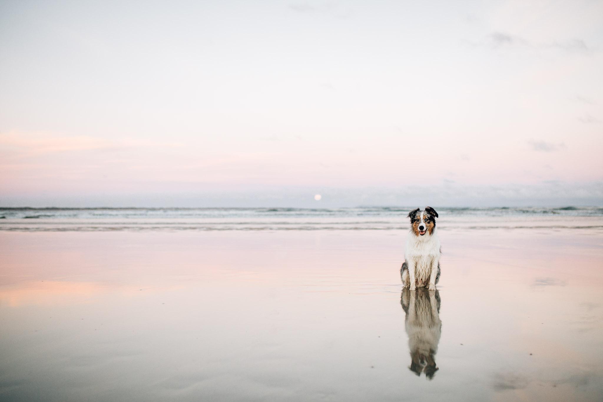 dog-on-wet-sand (1 of 1).jpg