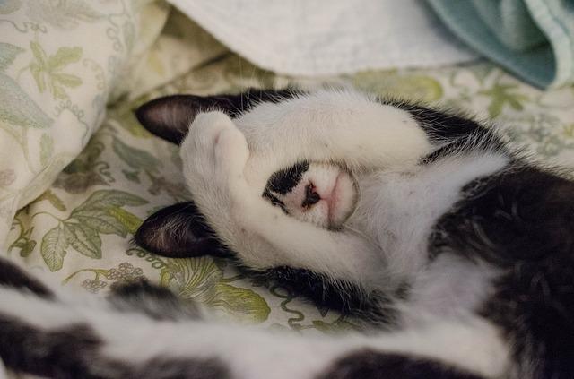Vad beror extrem trötthet på?