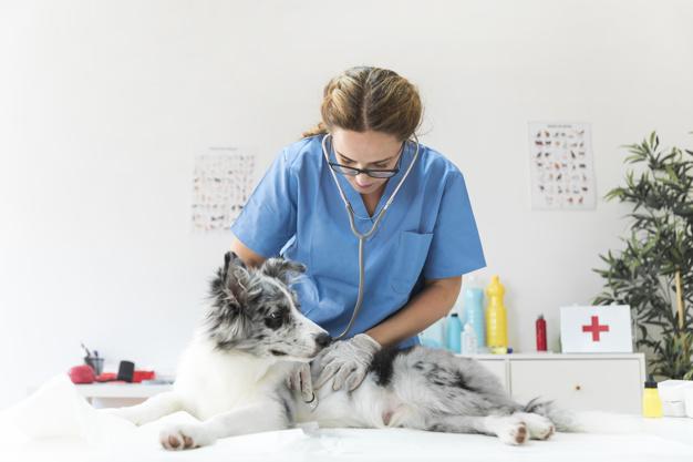 Hundens Egen Hälsa - Även hundar kan bli stressade eller sjuka. Här får du läsa mer om detta, samt om hälsofrämjande åtgärder för att din fyrbenta älskling ska må bra. Här finns även tips till bra resurser gällande hundens hälsa och välmående.