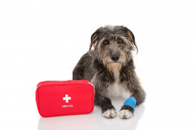 Första hjälpen för hund