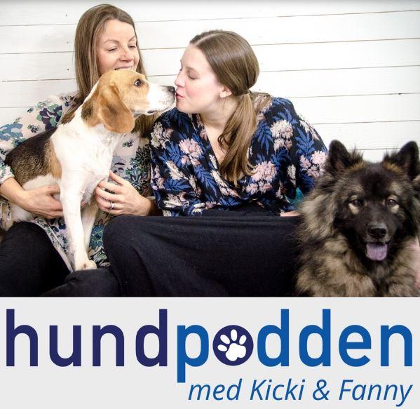 Första hjälpen för sjuk eller skadad hund