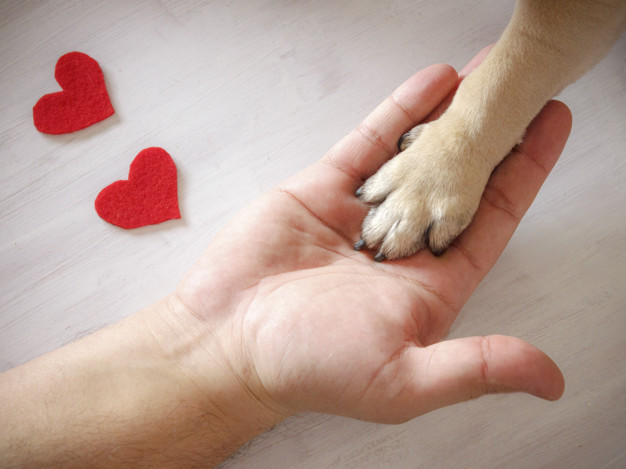 man-holds-dog-s-paw-with-love-red-hearts-white-background_72594-1080.jpg