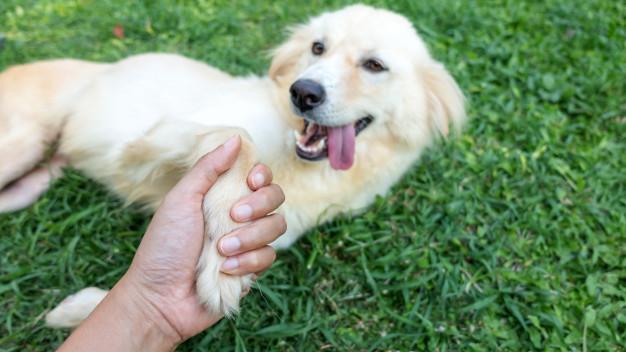 Hundens hälsa första hjälpen