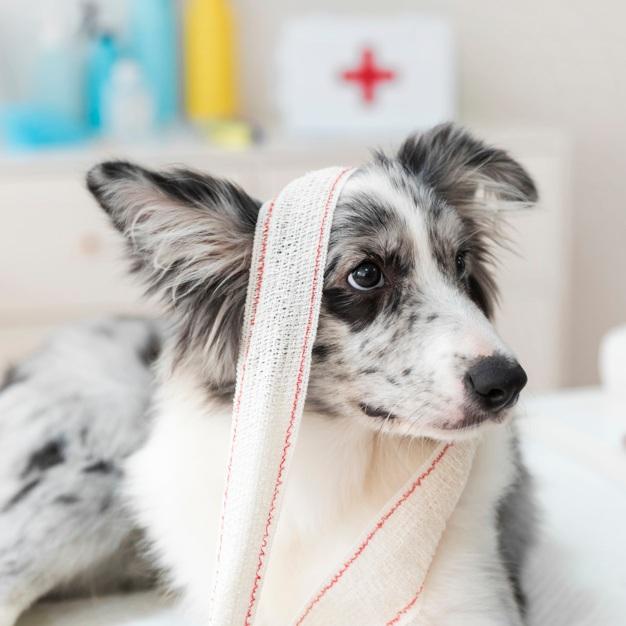 Första Hjälpen för Hund - Vet du vad du ska göra om din hund blir akut sjuk eller skadad? Det kan t.ex. handla om blödningar, ormbett, värmeslag eller förgiftning.I denna text får du länkar till viktig information om första hjälpen för sjuk eller skadad hund.