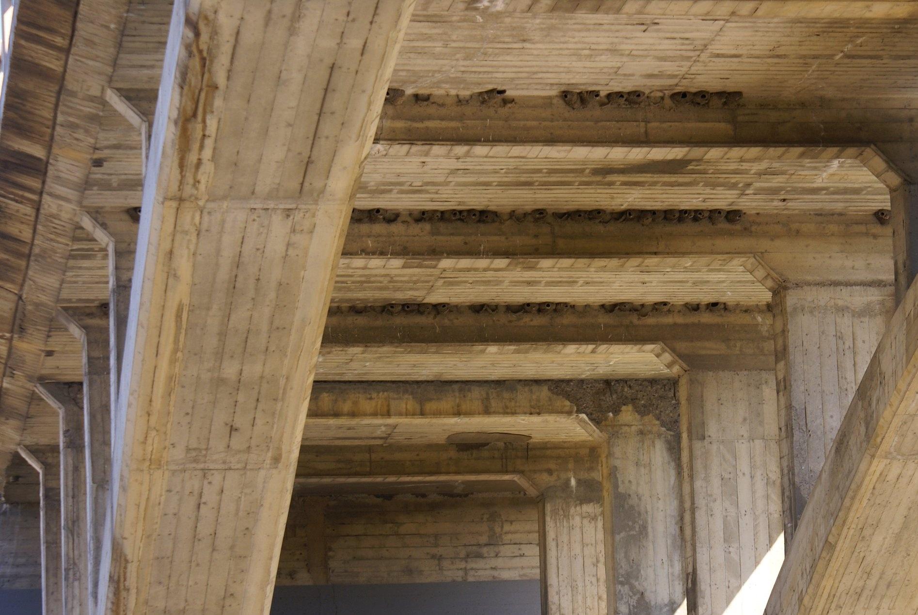 Nidification des hirondelles à front blanc sous les ponts
