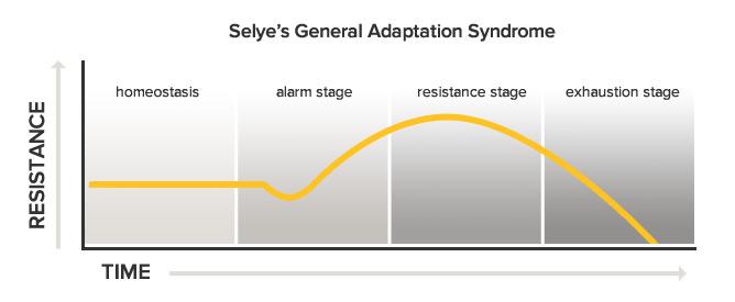 general-adaptation-syndrome.jpg