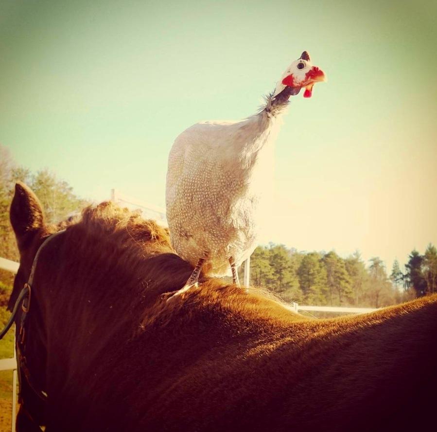 animaltherapy.jpg
