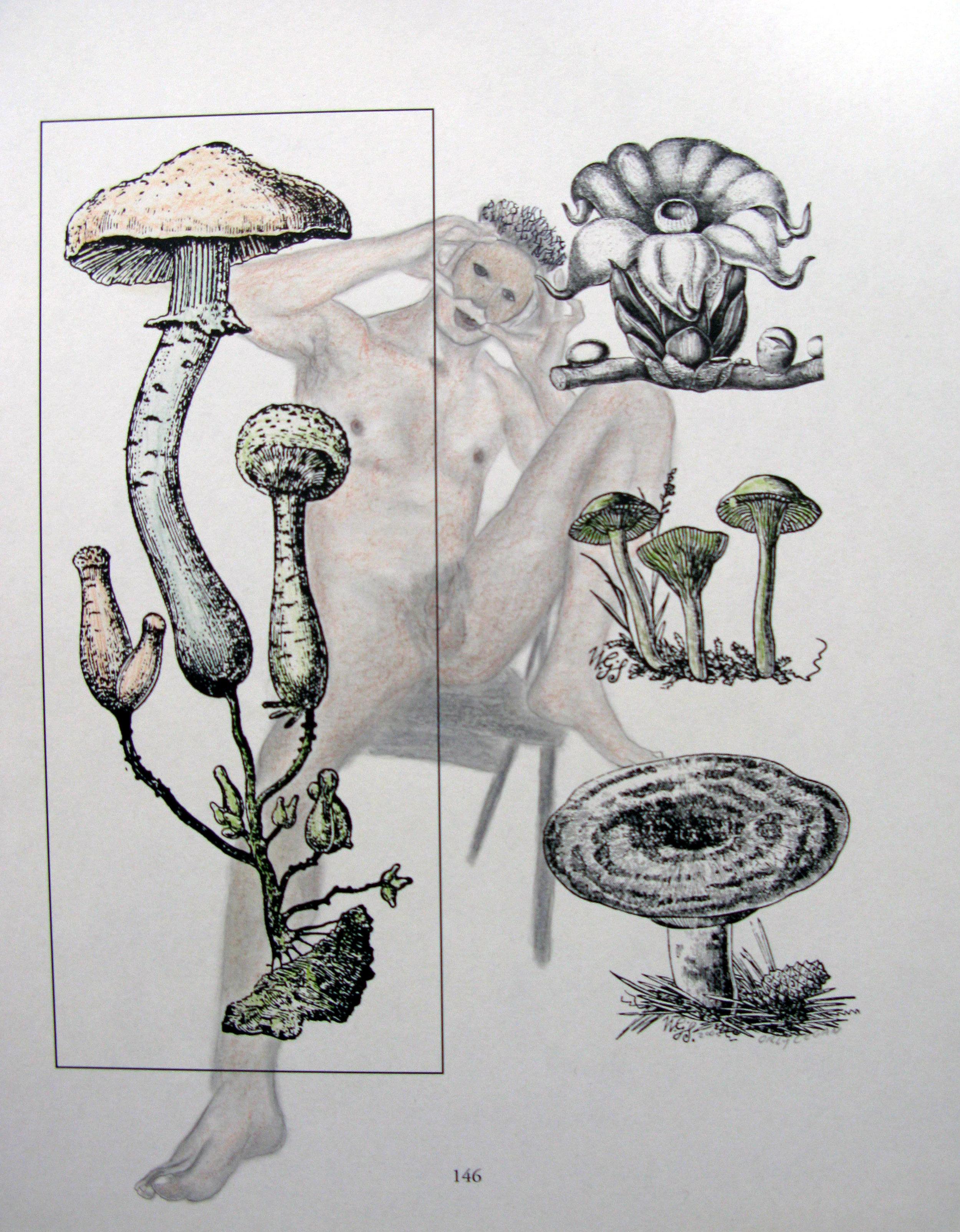 Fungus among us