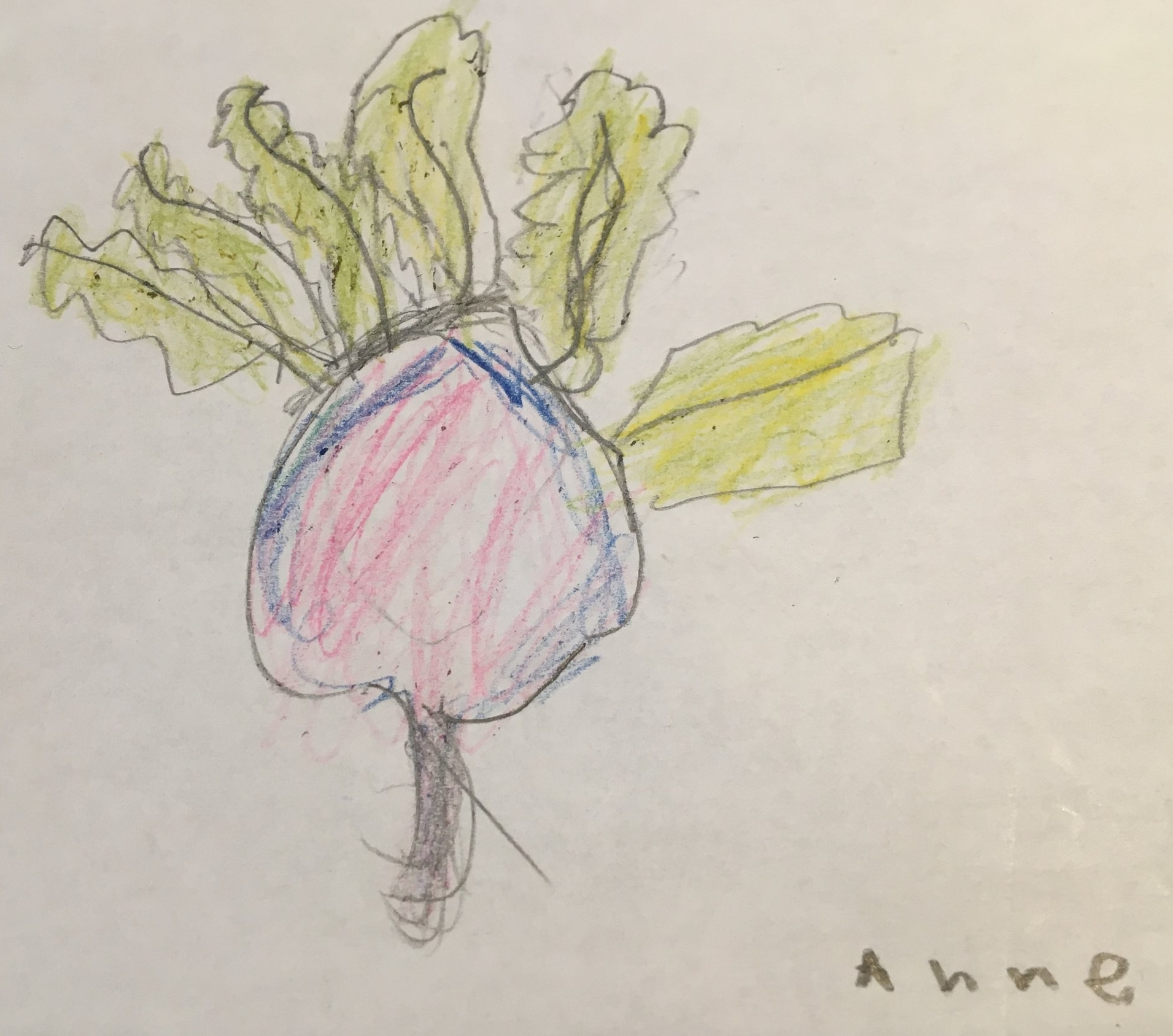A Beet by  Anne Cook