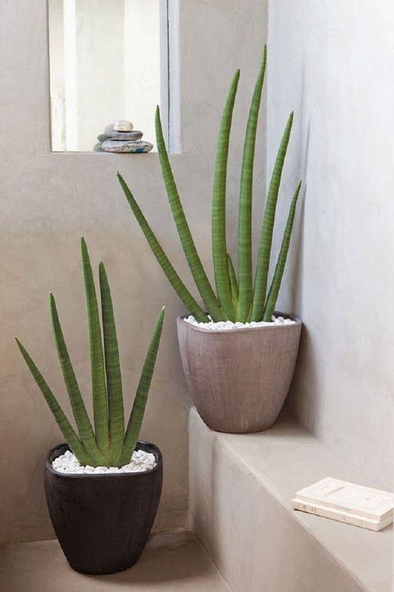 Aloe 3.jpg