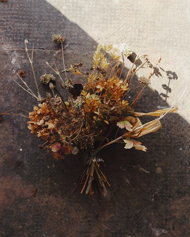 #lovelydeadcrap ~ still one of my all time favourite hashtags 🌾