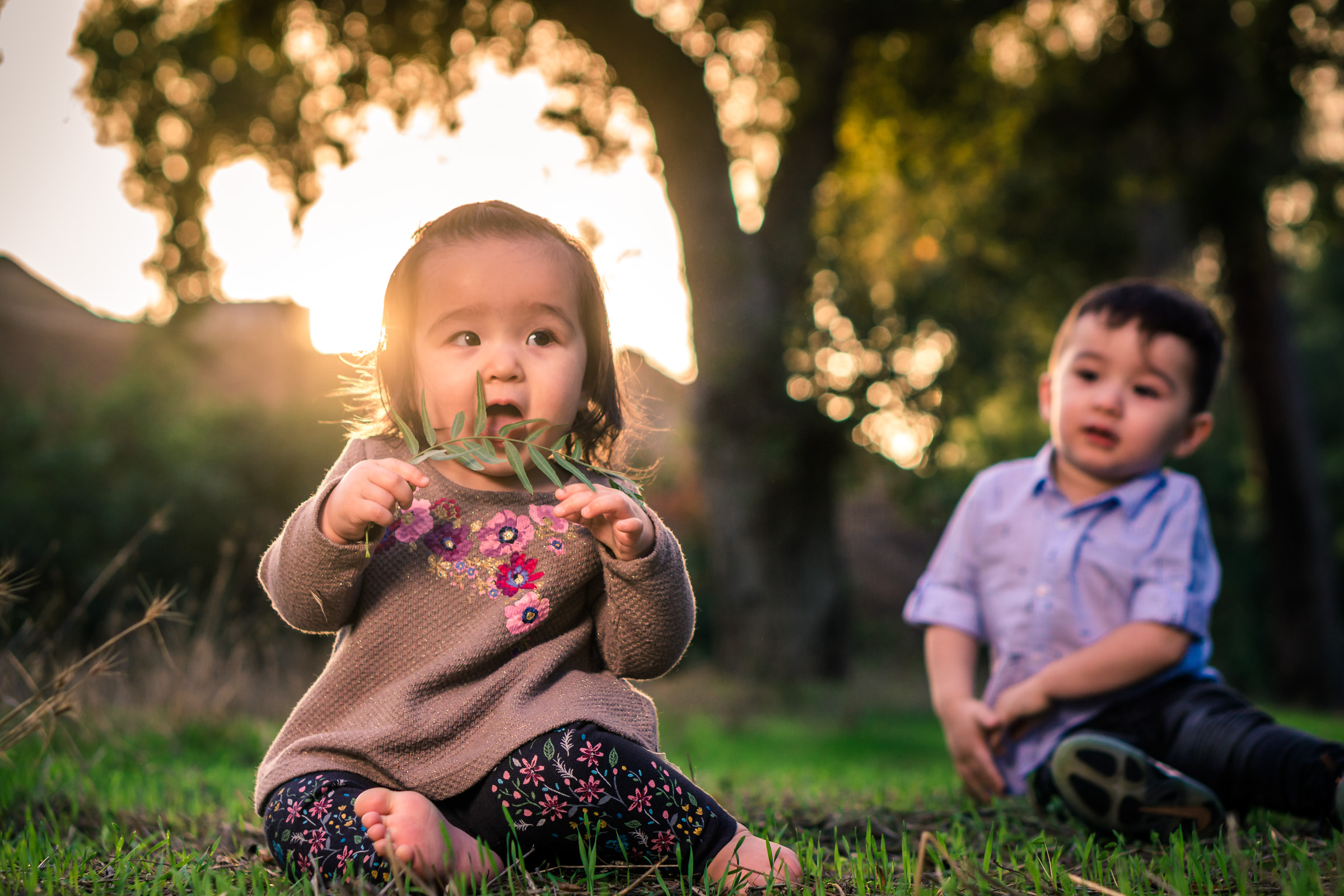 Portrait of a cute Little baby girl eating a leaf and playing in the grass with her brother on the Juanita Cooke Trail in Fullerton during a family portrait session