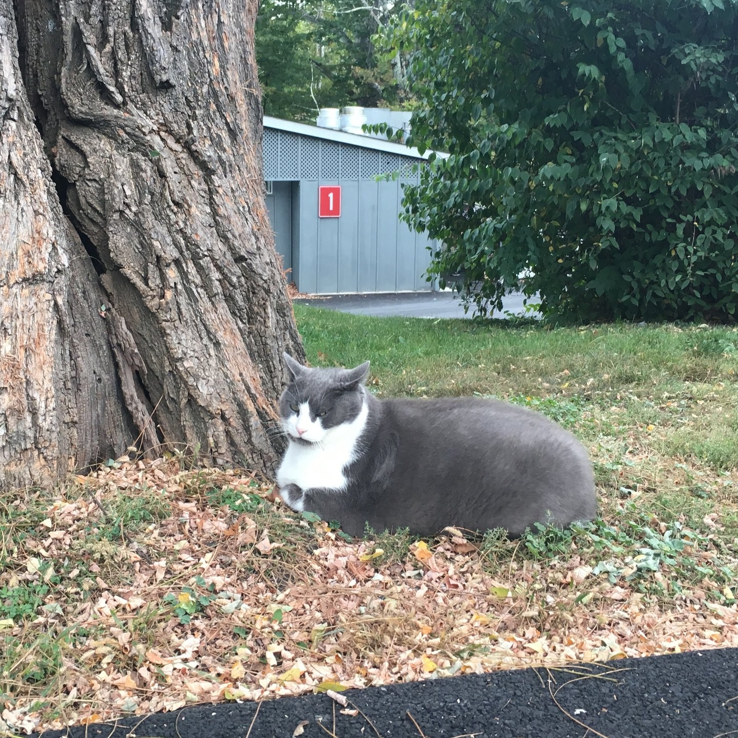 This is Bourbon, the 28-pound cat that has nothing to do with this post.