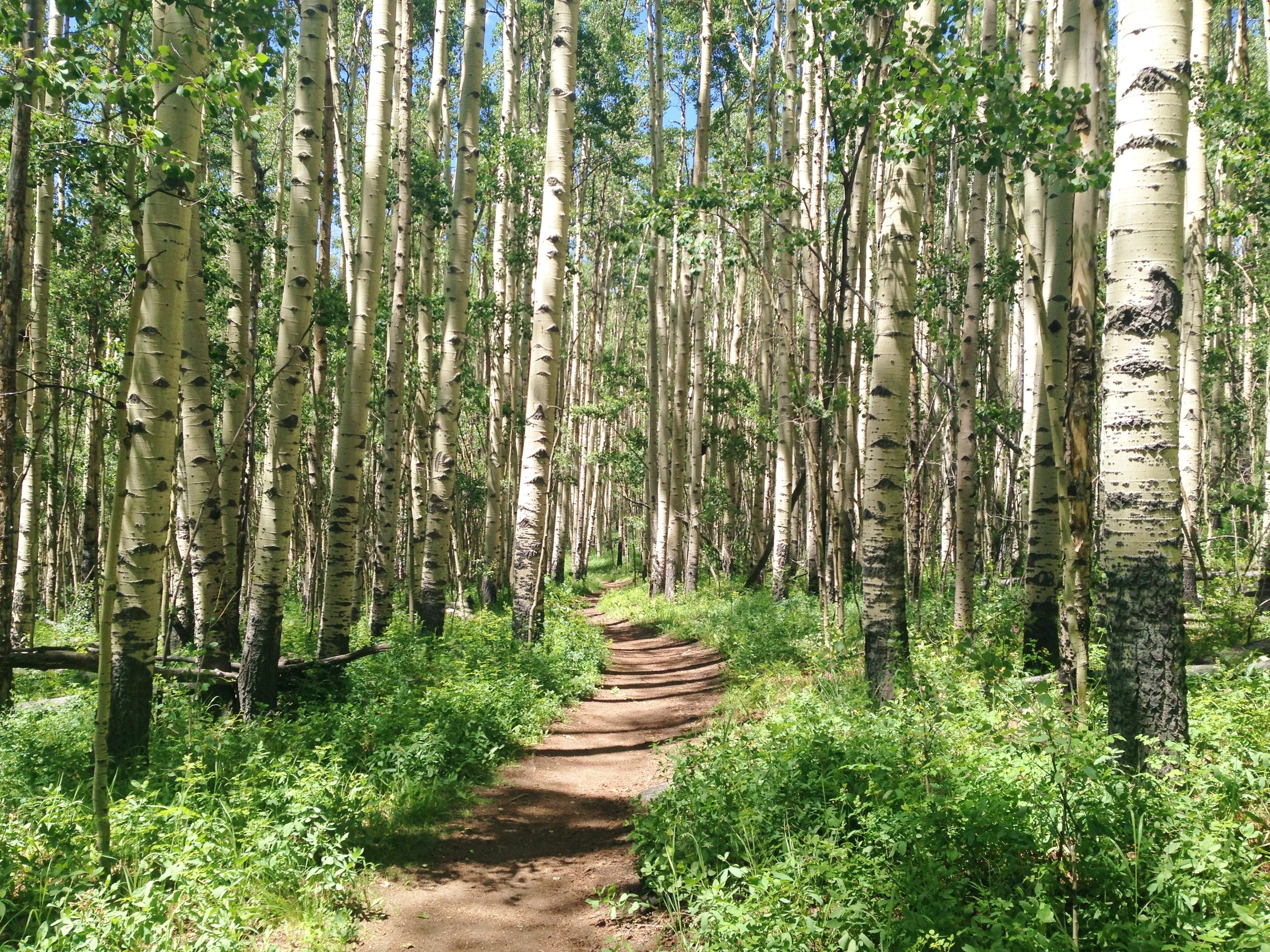 Day 6:  I walked through tunnels of aspen on the east side of Kenosha Pass, reached the parking lot and took a huge digger after tripping over my own feet. I called it a day and made camp to lick my wounds and comfort my bruised ego. Daily mileage: 14.6. Total miles: 71.7.