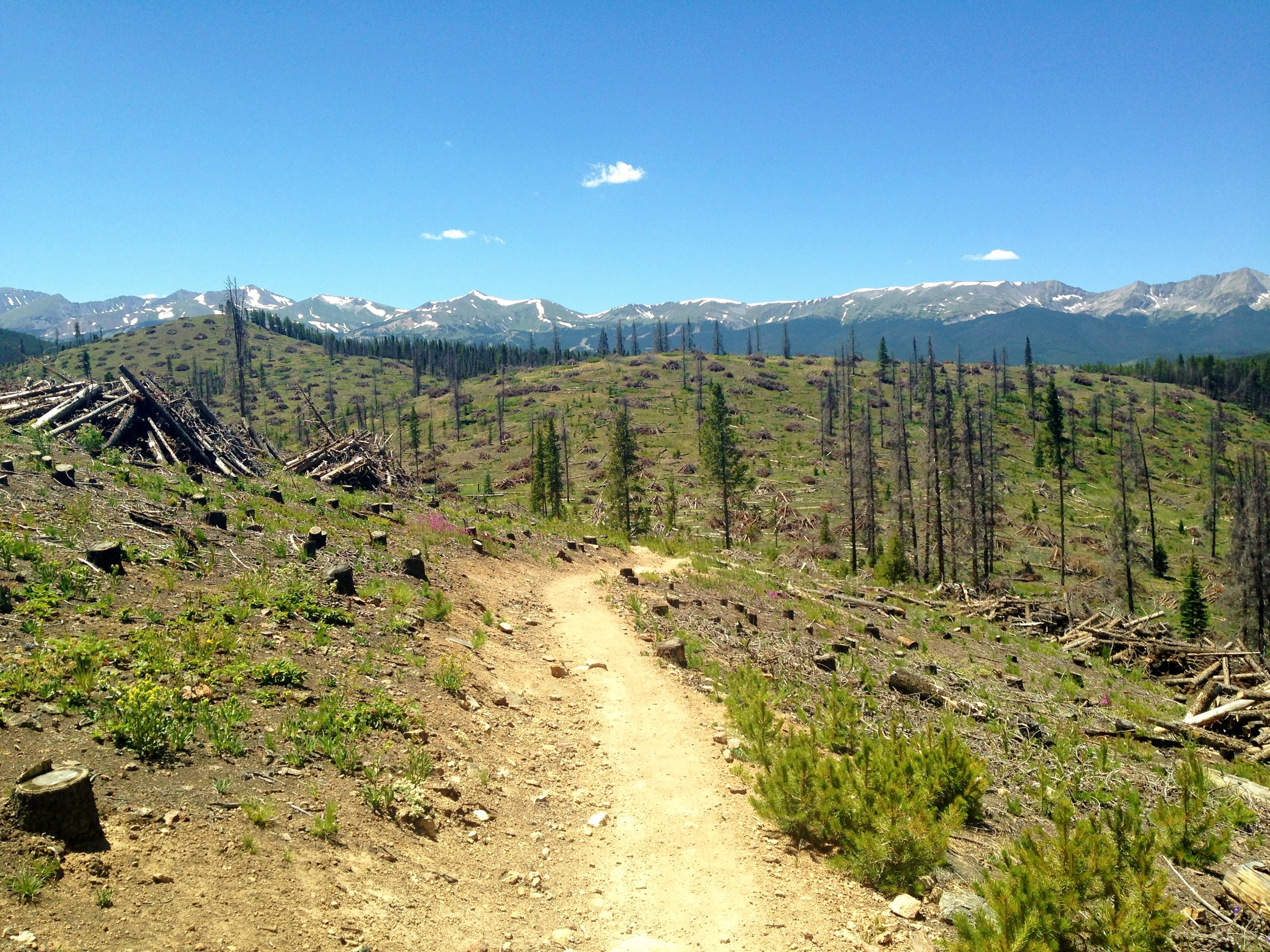 Day 8:  There's so much beetle kill outside of Breckenridge in Segment 6, but they're doing a great job of forming slash piles for controlled burns. Beetles are ravaging our spruce forests right now. I was shocked at how pervasive it is across Colorado, and especially along the CT. (cont'd)