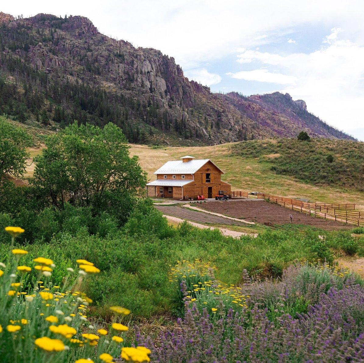 Living the Dream on Dutch Ridge Ranch