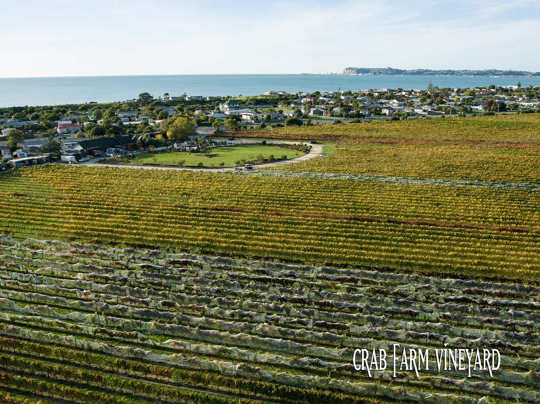 Crab Farm Winery Vineyard