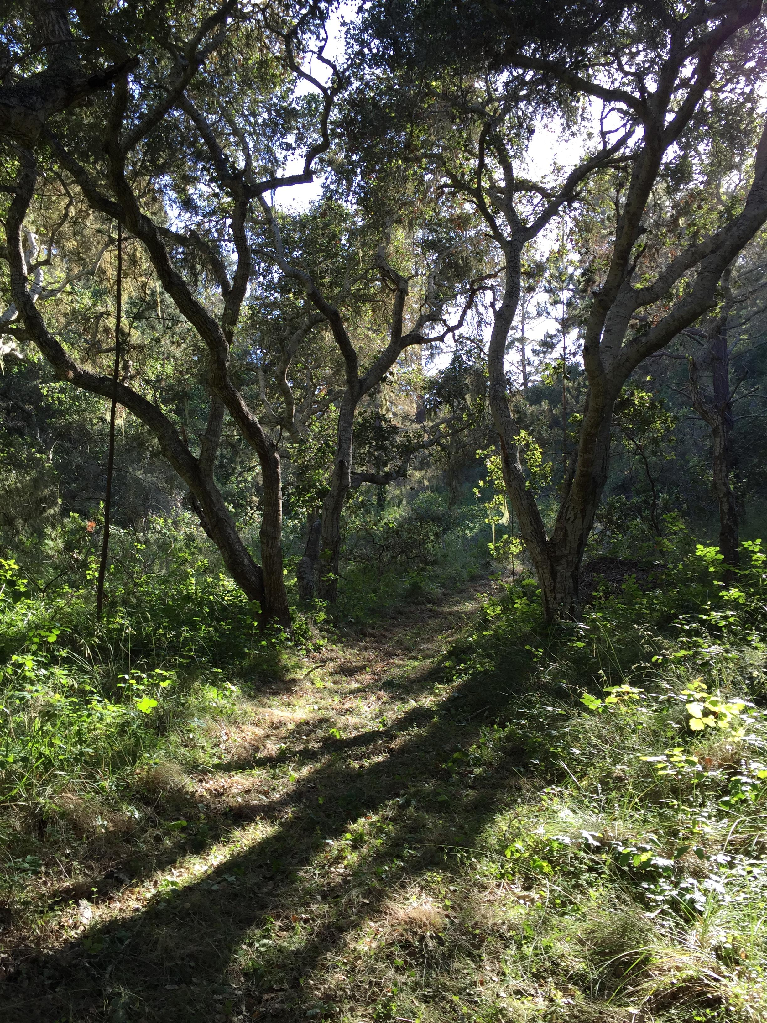 lot48 split oaks trail.jpg
