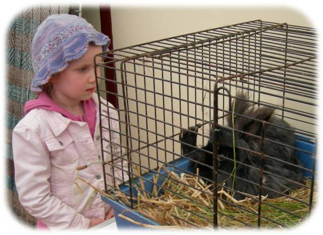 ara-bunny.jpg