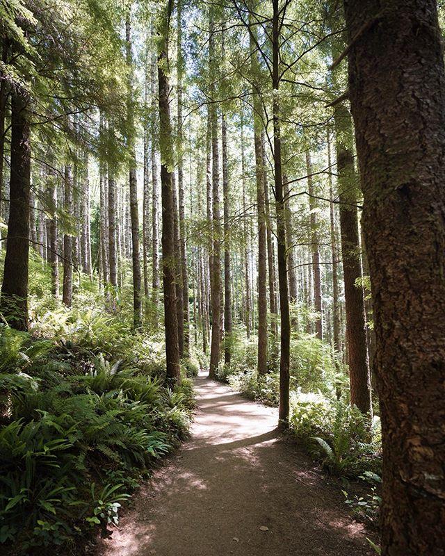 Quiet forest wanderings 🍃