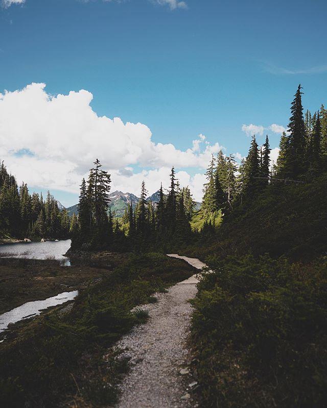 Wandering around Mount Baker ✨