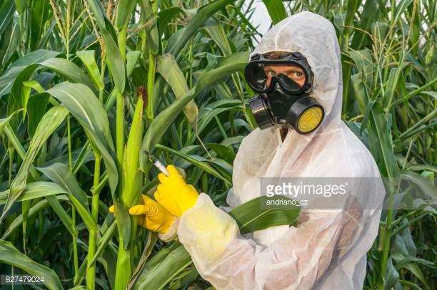 GMO Foods, Sprays & Toxicity