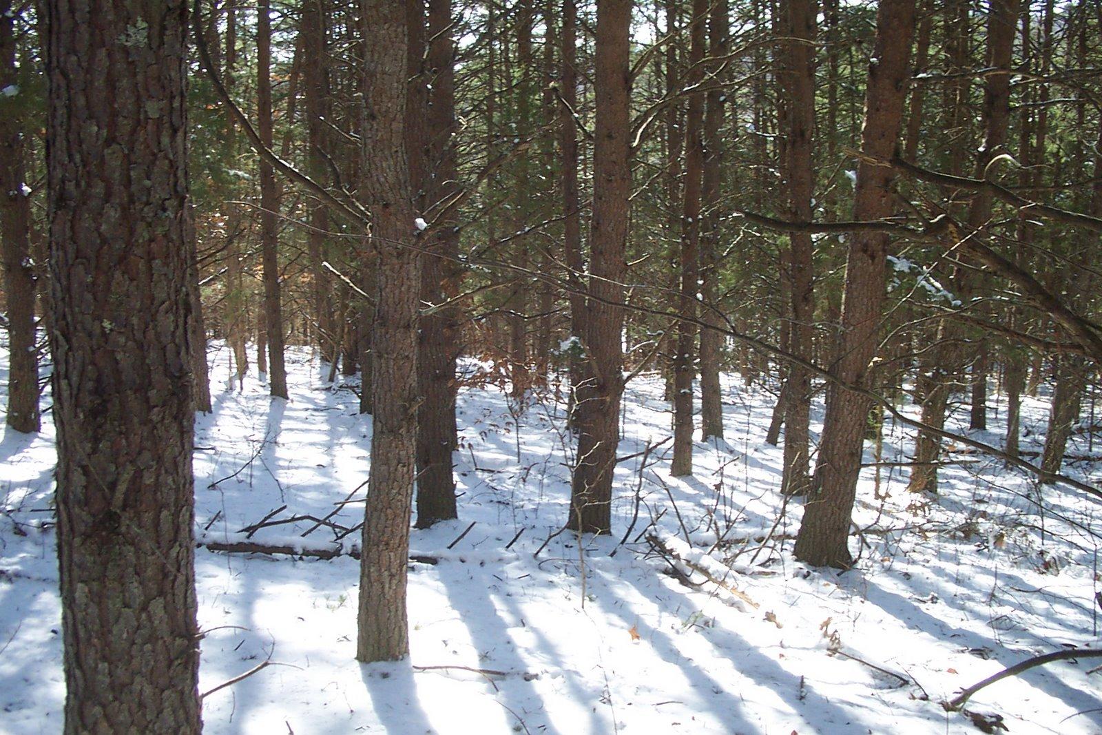 woodswalk 4 march 2009scalped 096.jpg