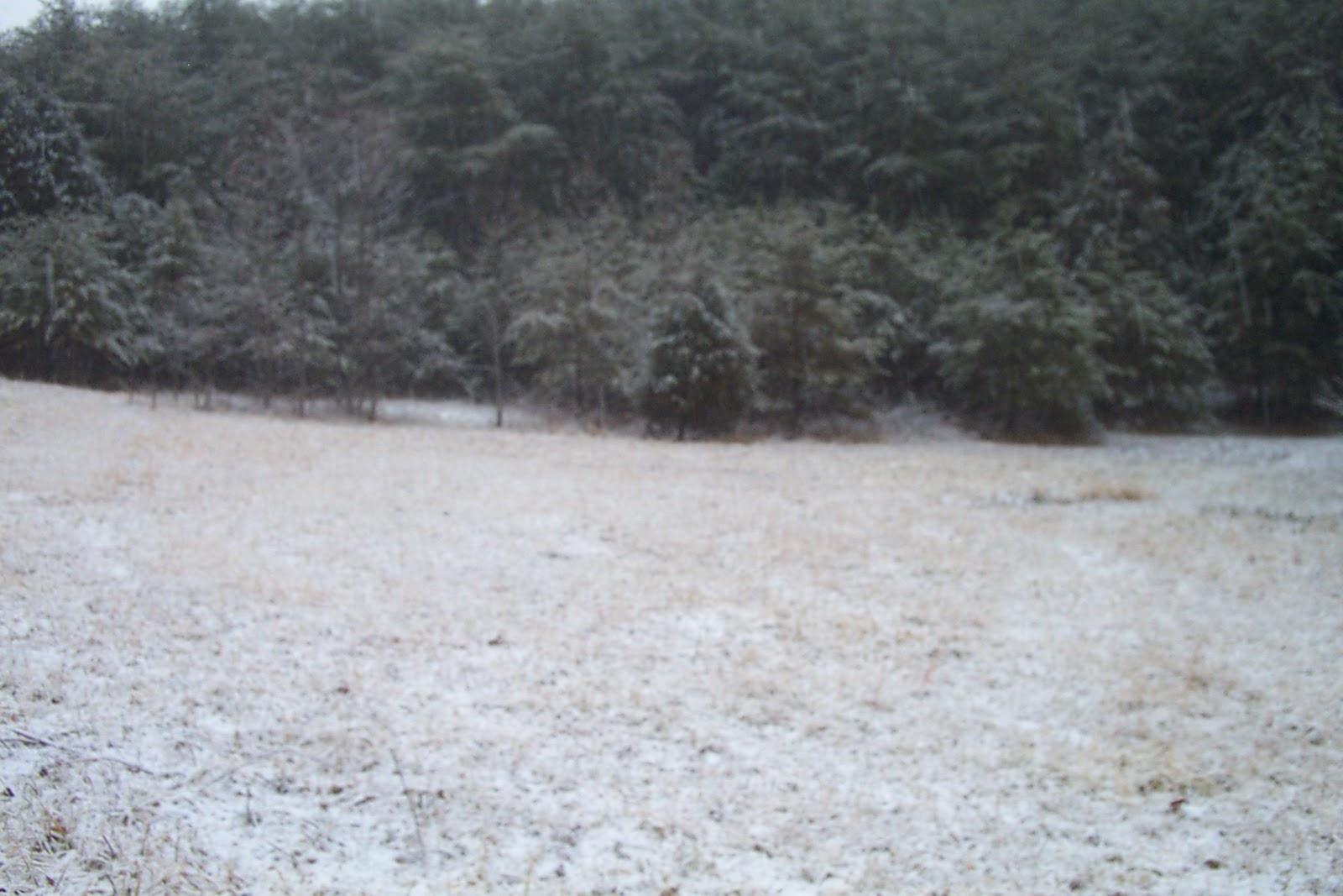 a gentle january snow 006.jpg