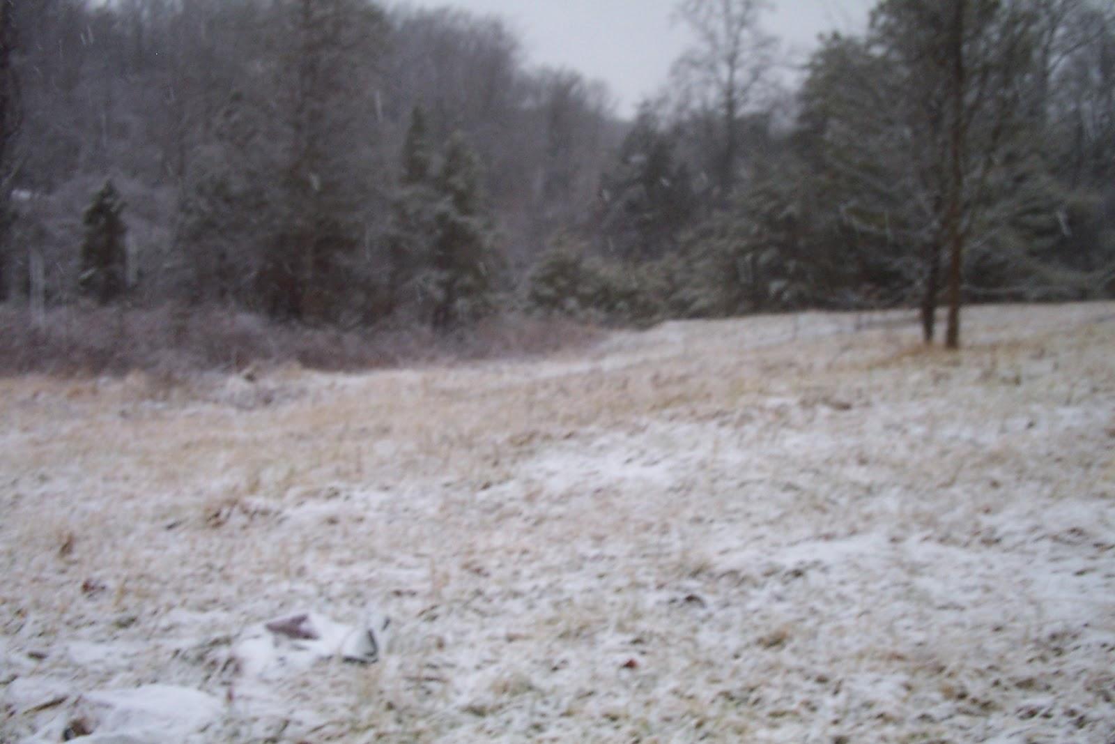 a gentle january snow 009.jpg