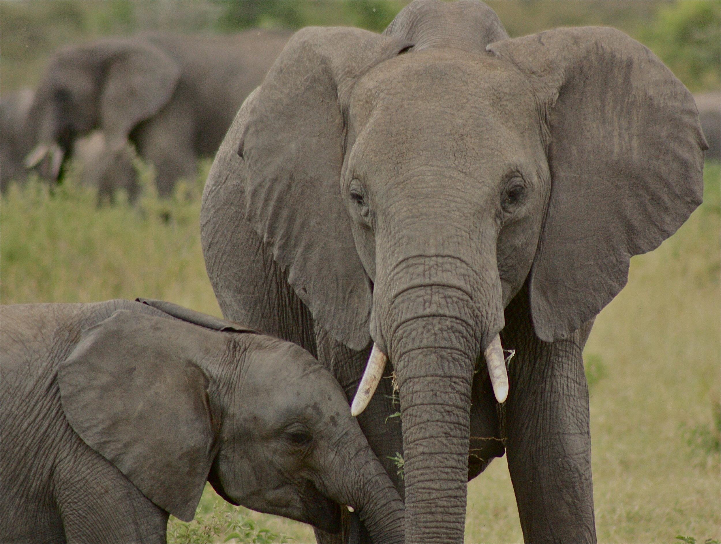 Africa Animal 1.JPG