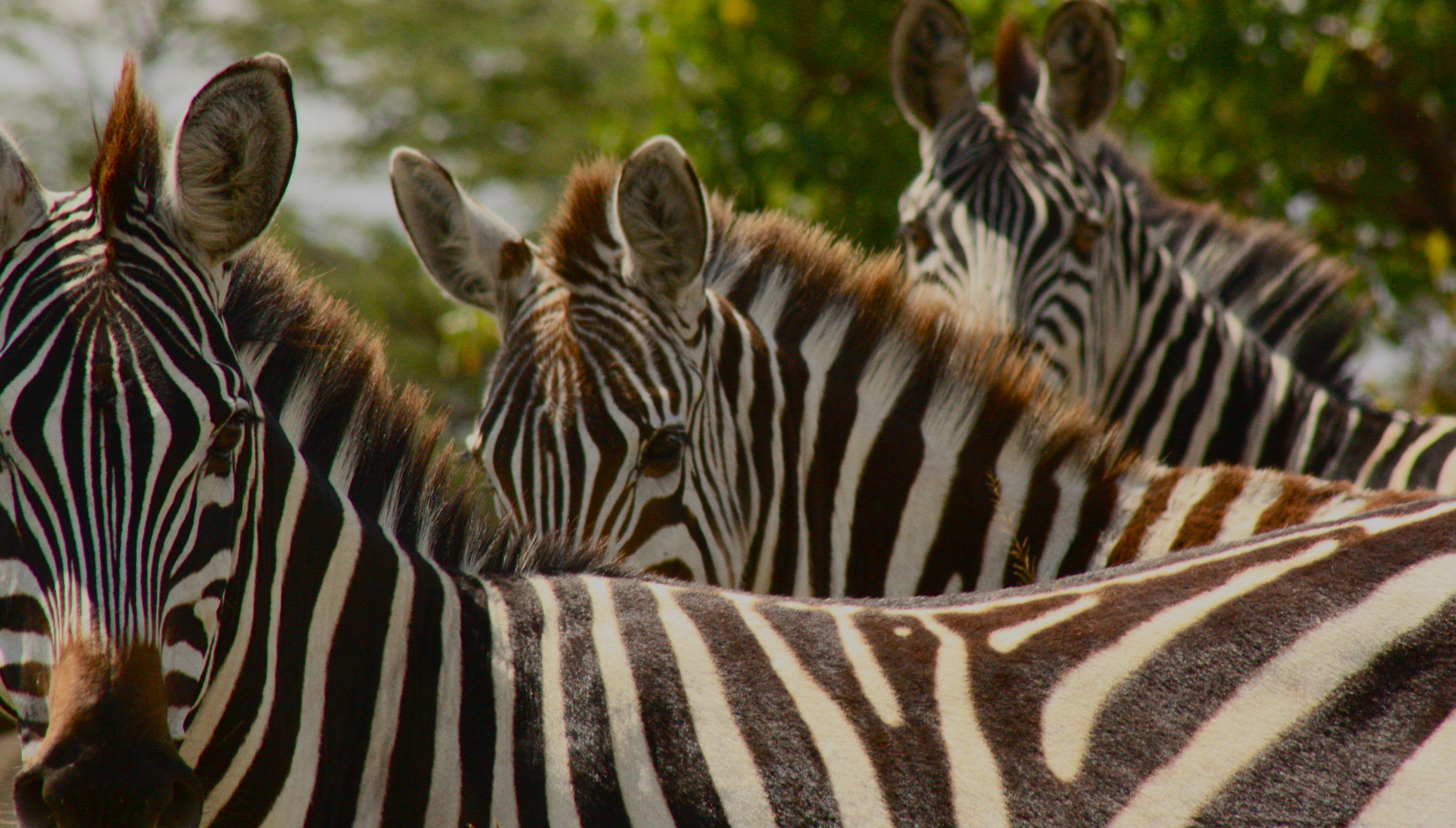 Africa Animal 12.JPG