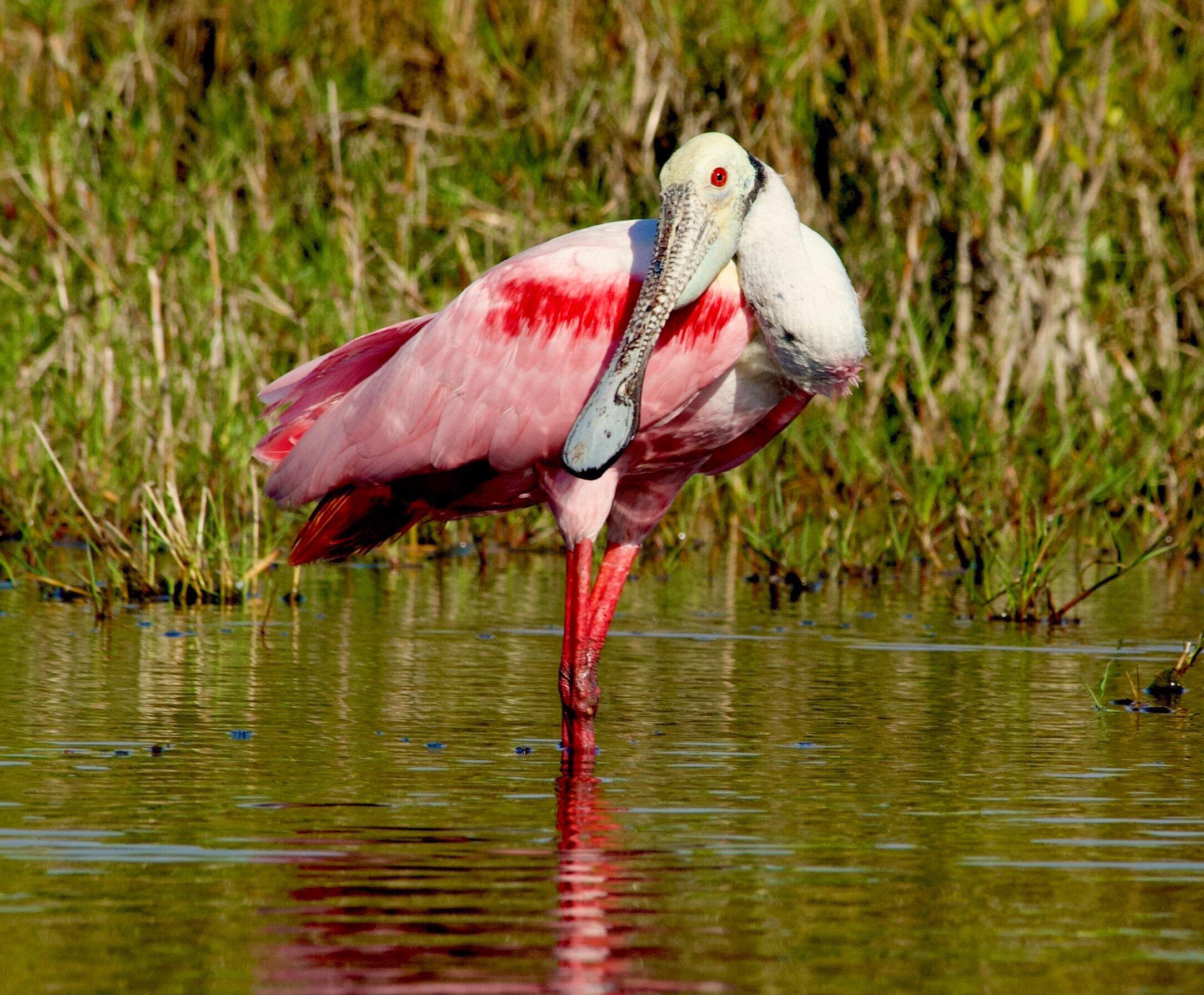 Exploring Florida's Merritt Island National Wildlife Refuge