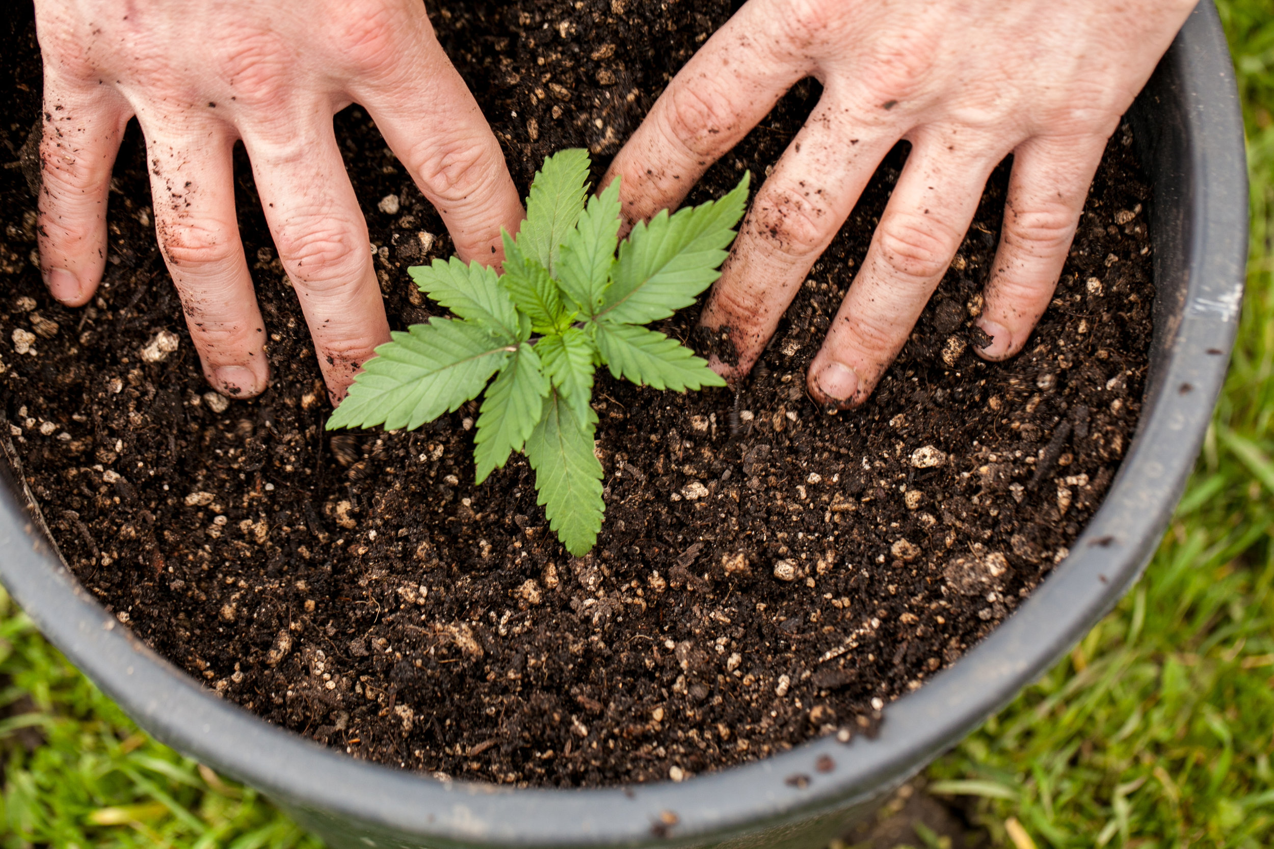 Become a member of Curative Care & save money by growing your Cannabis! -