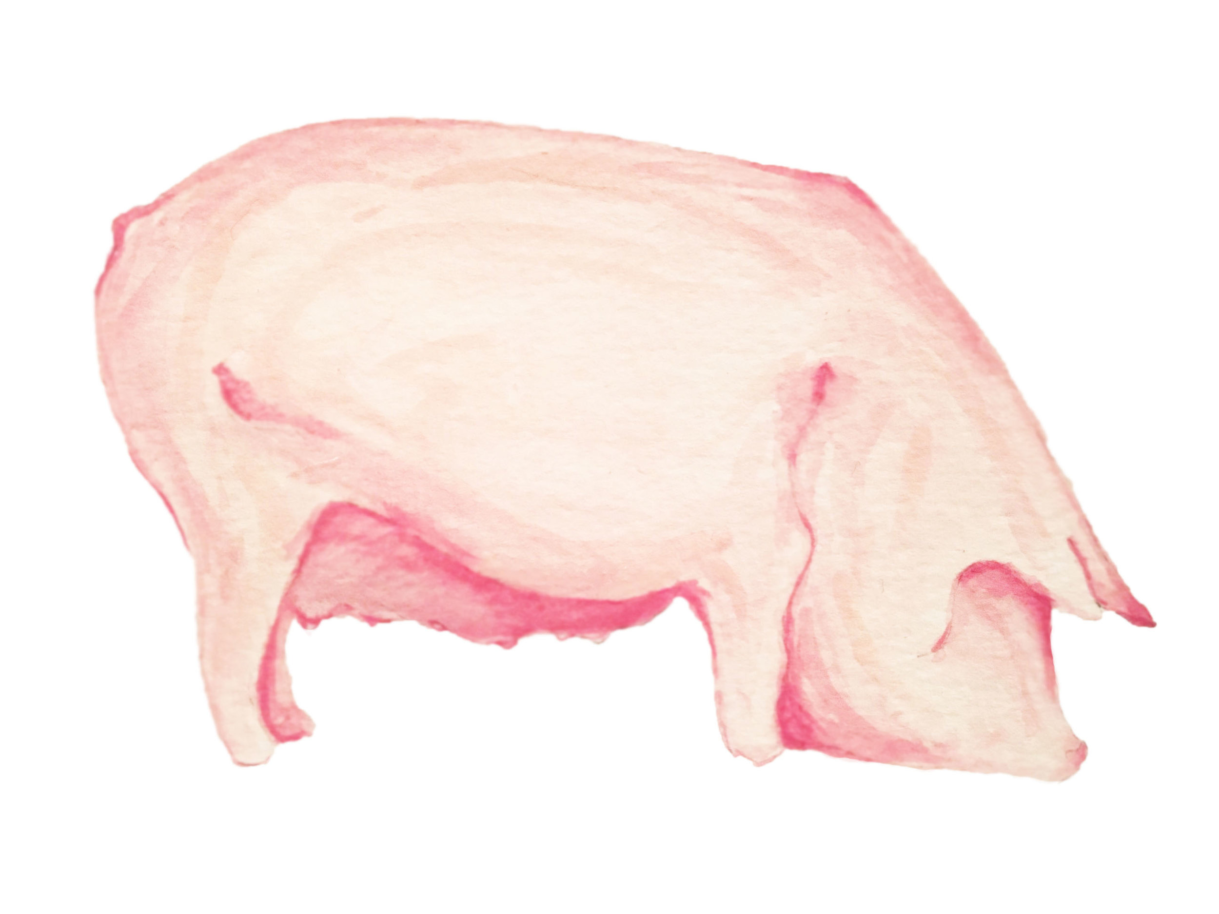 2017.02.08_Pig Version 2_Light.jpg