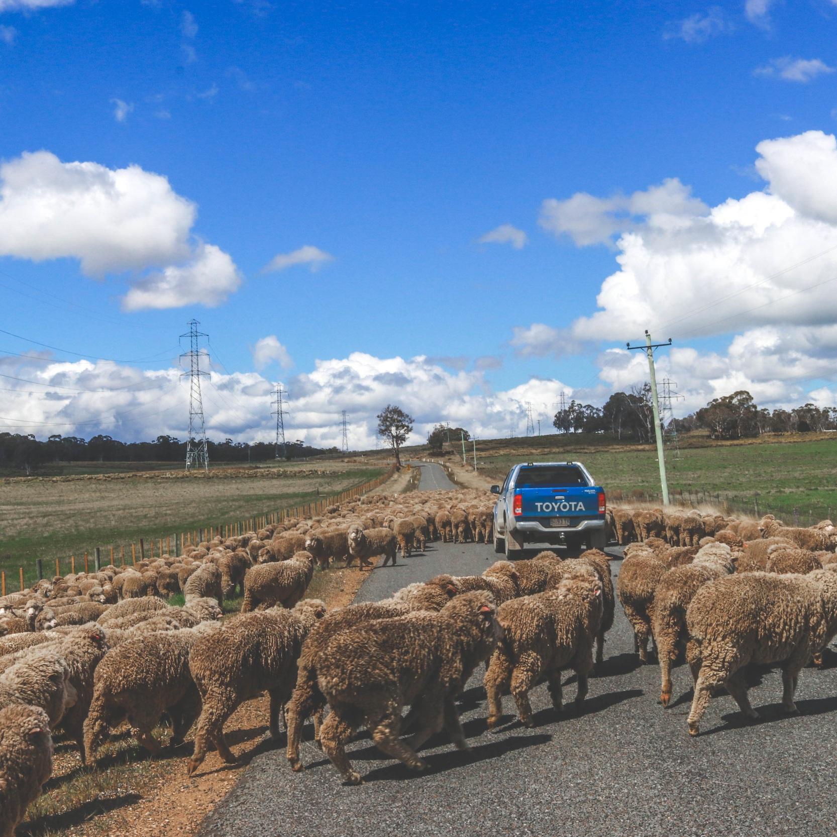 WILD TASMANIAROAD TRIP -