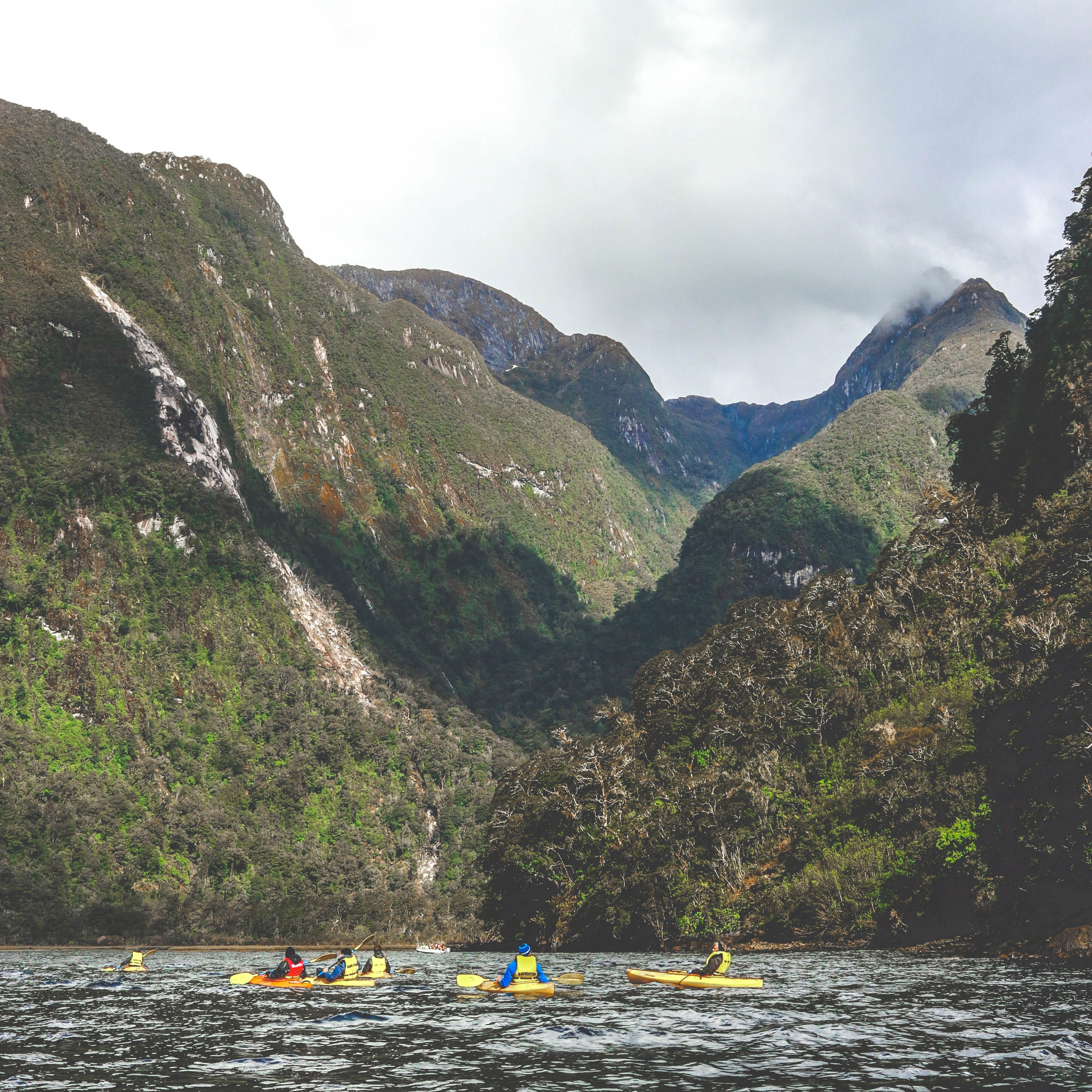 CRUISING THE FIORDLANDS -