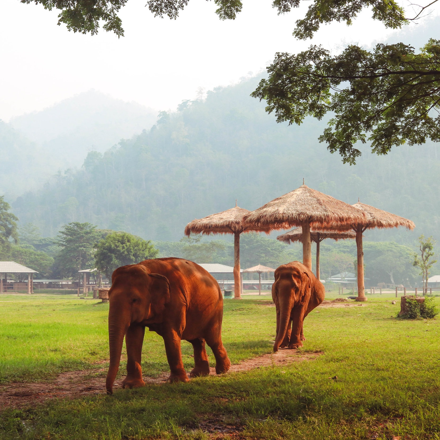 ELEPHANT NATURE PARK -