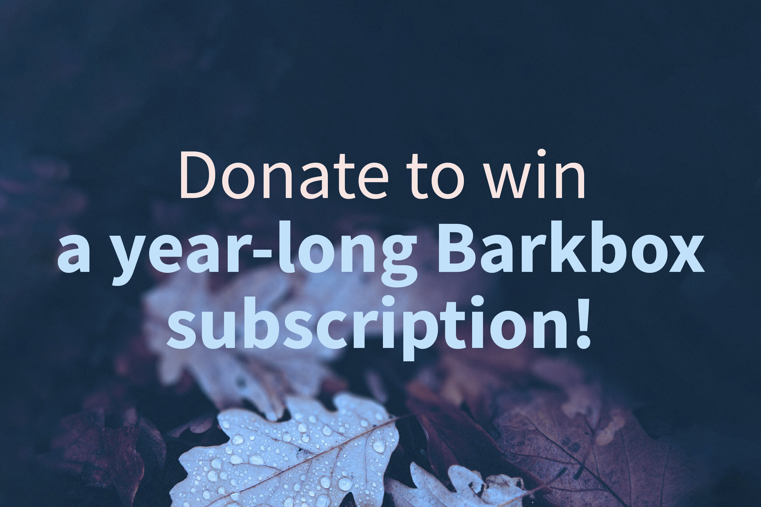 191003b donate_barkbox.jpg